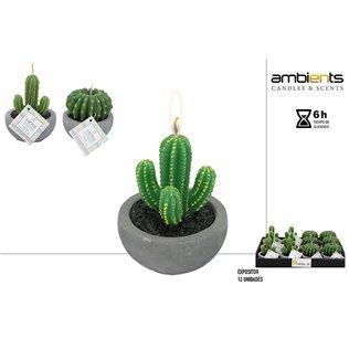 Vela cactus - 2/s - disp 12